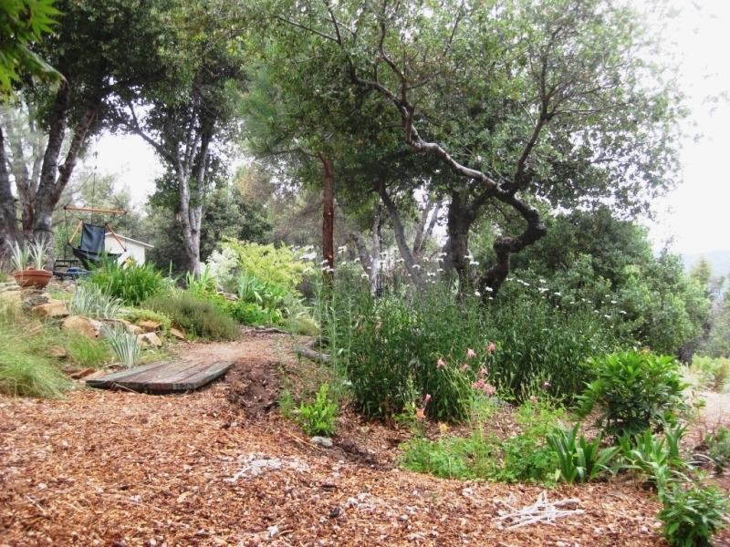 2010 Summer- Rain garden