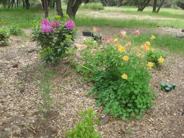 2011 Spring- Rain garden
