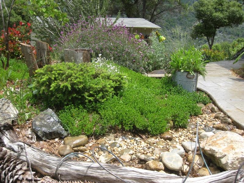 2011 Spring Summer- Dry creek and rain garden