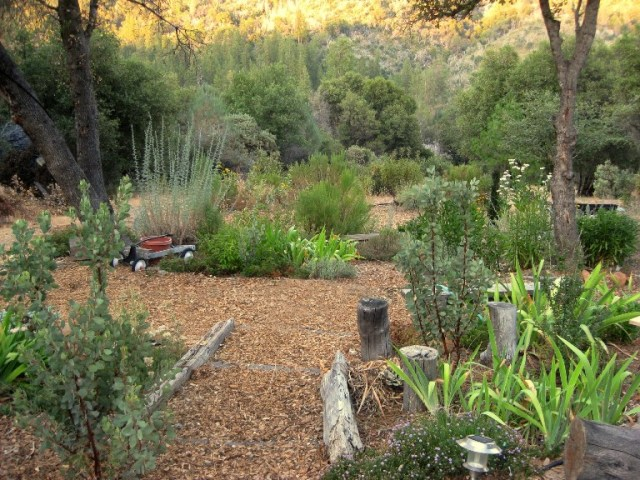 Beds and paths are mulched to prevent weeds