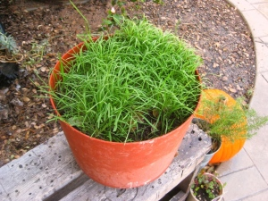 Pot full of grass