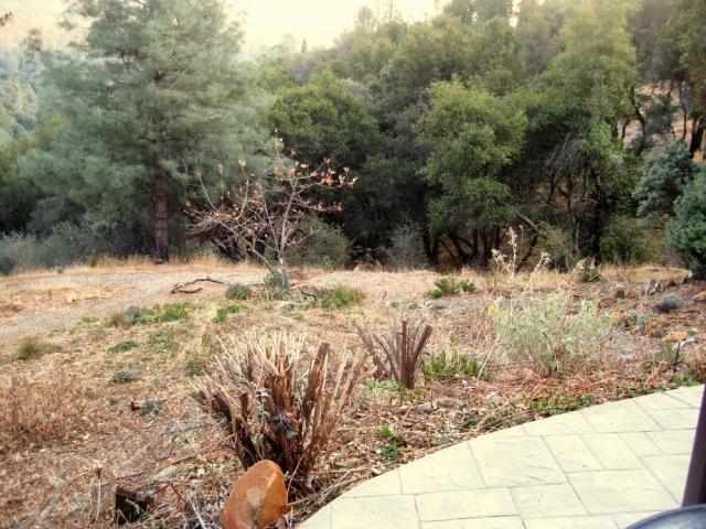 South area of the garden