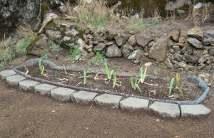 Wire lined iris bed