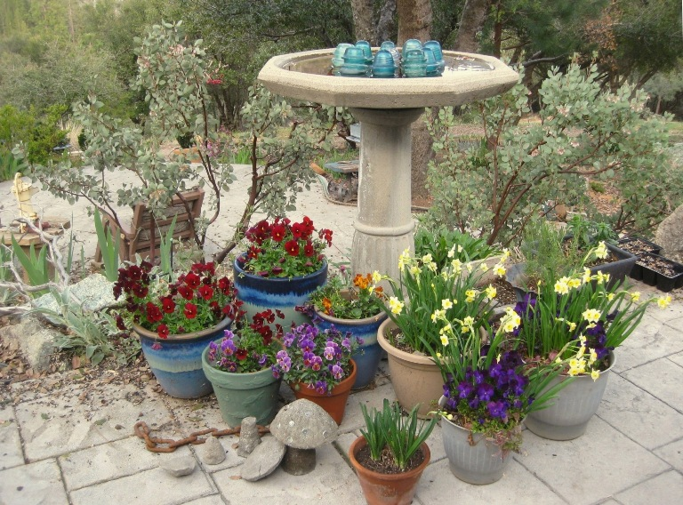 Bird, violas and narcissus cheer up the patio