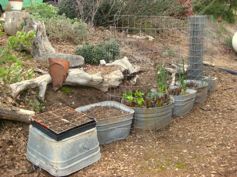 Lettuce and onion garden