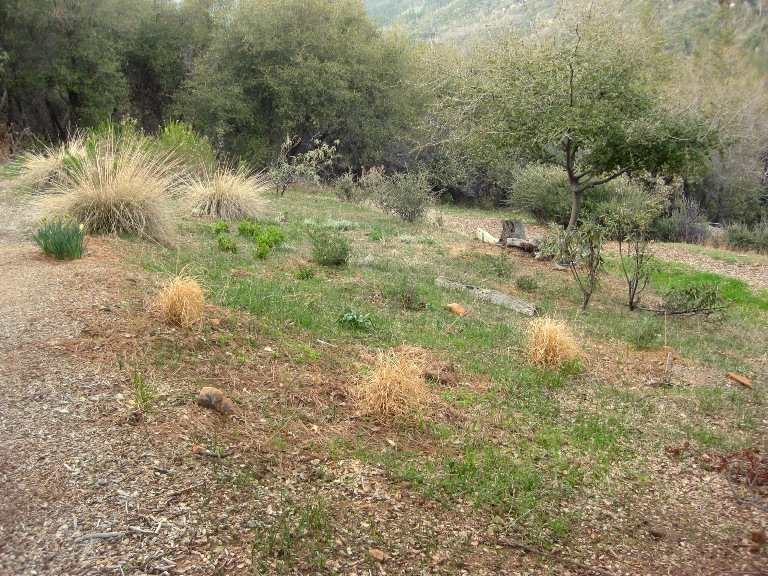 Natural meadow needs weeding and non native grasses removed