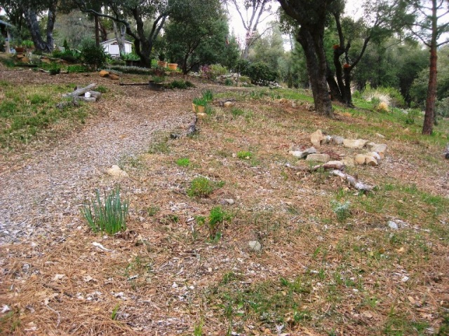 New CA native planting area