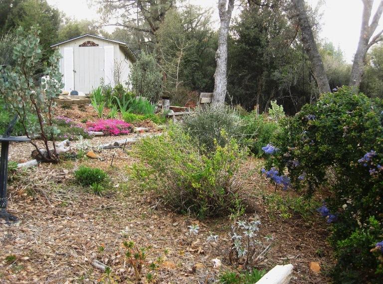 Salvia garden middle level
