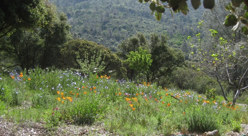 2012 April Meadow