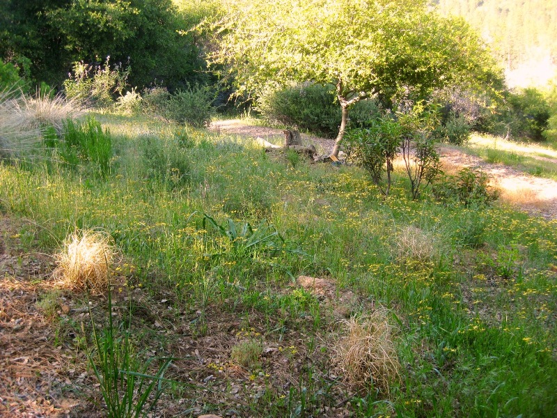 In the center is where the wildflower transplants were installed.
