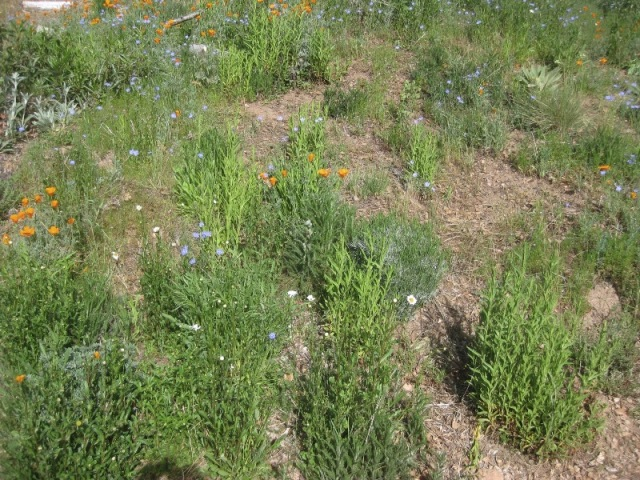 The brighter greens are cudweed