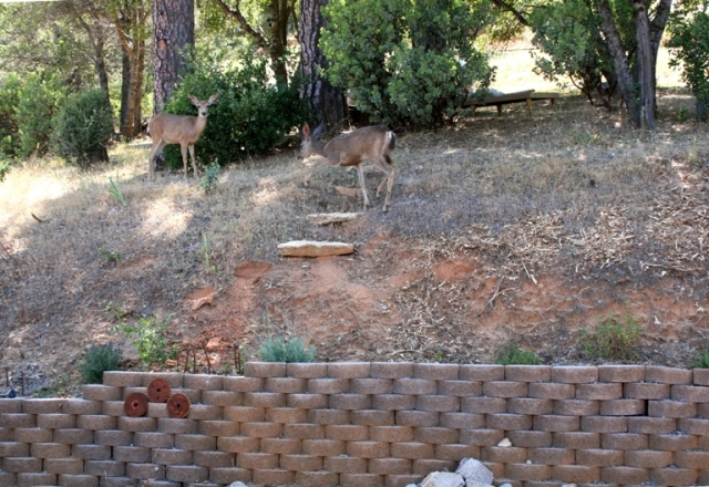 2006-6 Bank with deer