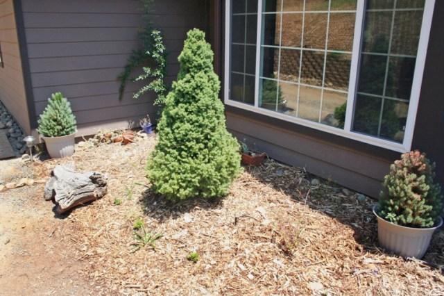 2006-6 Front garden