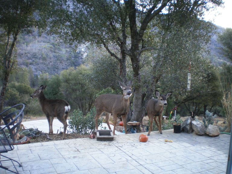 2007-1 Patio garden and deer