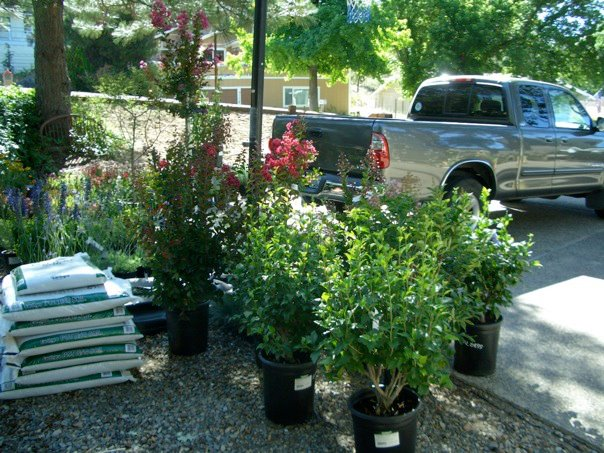 Shrubs, trees, soil, everything you need
